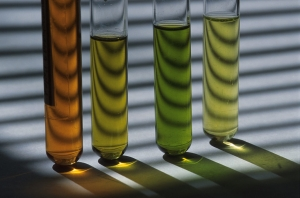 CSIRO_ScienceImage_7630_test_tubes